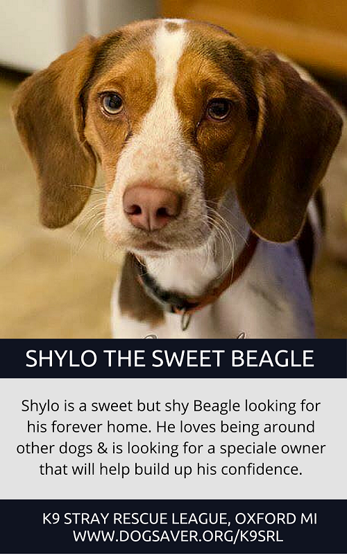 Lab Puppies For Sale Near Me Craigslist Michigan