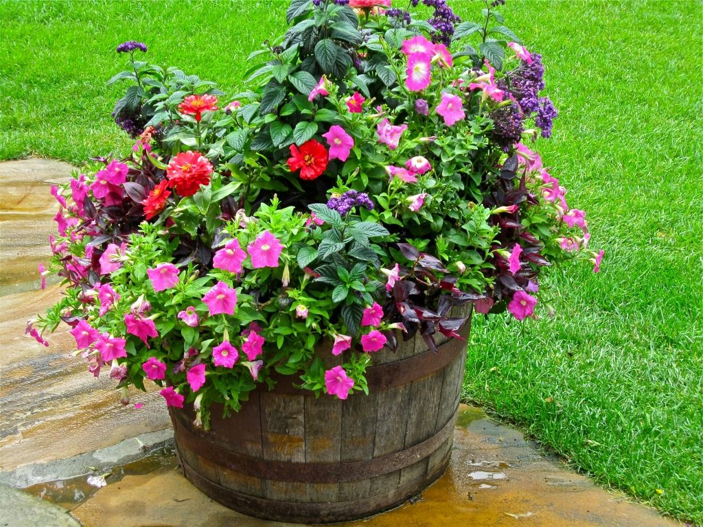 Whiskey barrel planter bought 2 from krogers for 20 for Wooden barrel planter ideas