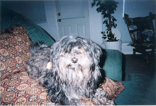 This is my Spencer.  He was with me for almost 16 years, before someone stole him from me.  Who would want to steal an old dog???  I miss my buddy.