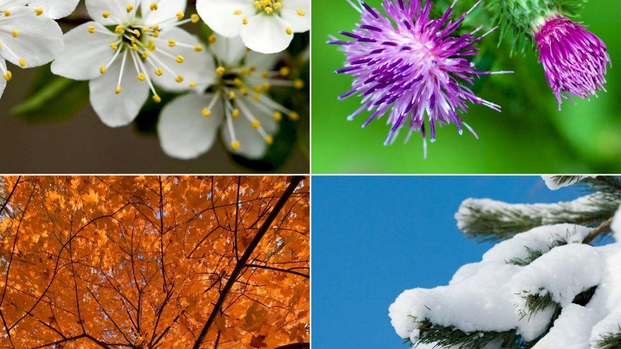 ترتيب فصول السنة الأربعة Flowers Arrangement Plants