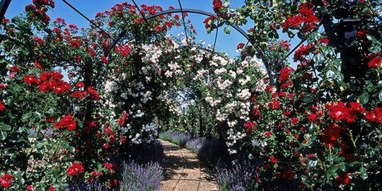 Warna Warni Lautan Bunga Di 5 Kebun Mawar Terindah Dunia Merdeka Com Kebun Mawar Kebun Bunga