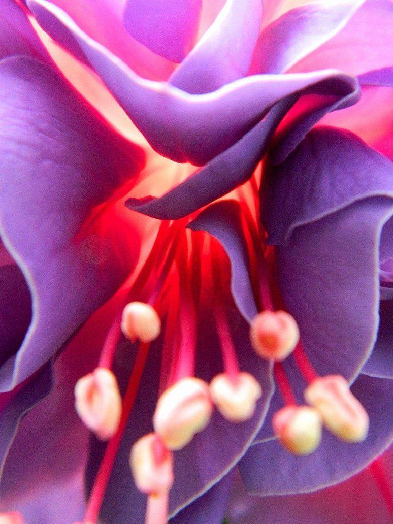 Pin De Sao Santos Em I Red And Purple I Look Vegetal