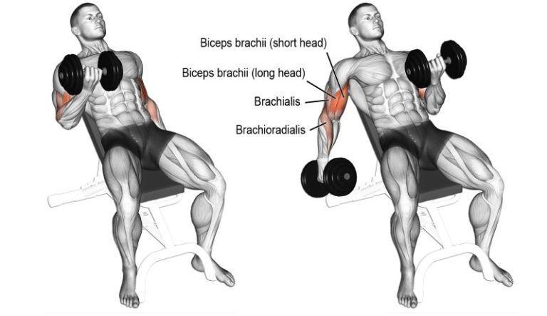 mejores ejercicios para biceps y triceps