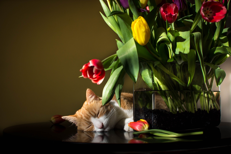 Tired Tulip Tulips Plants Flowers