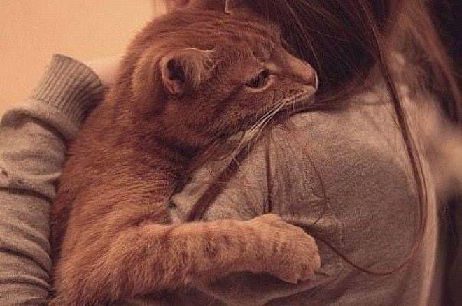 Кот обнимает девочку