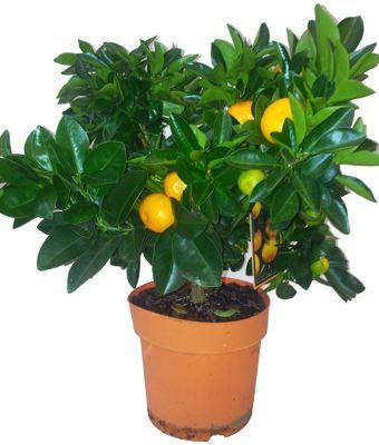 8.99 Home Base | Plants & Flowers etc. | Pinterest