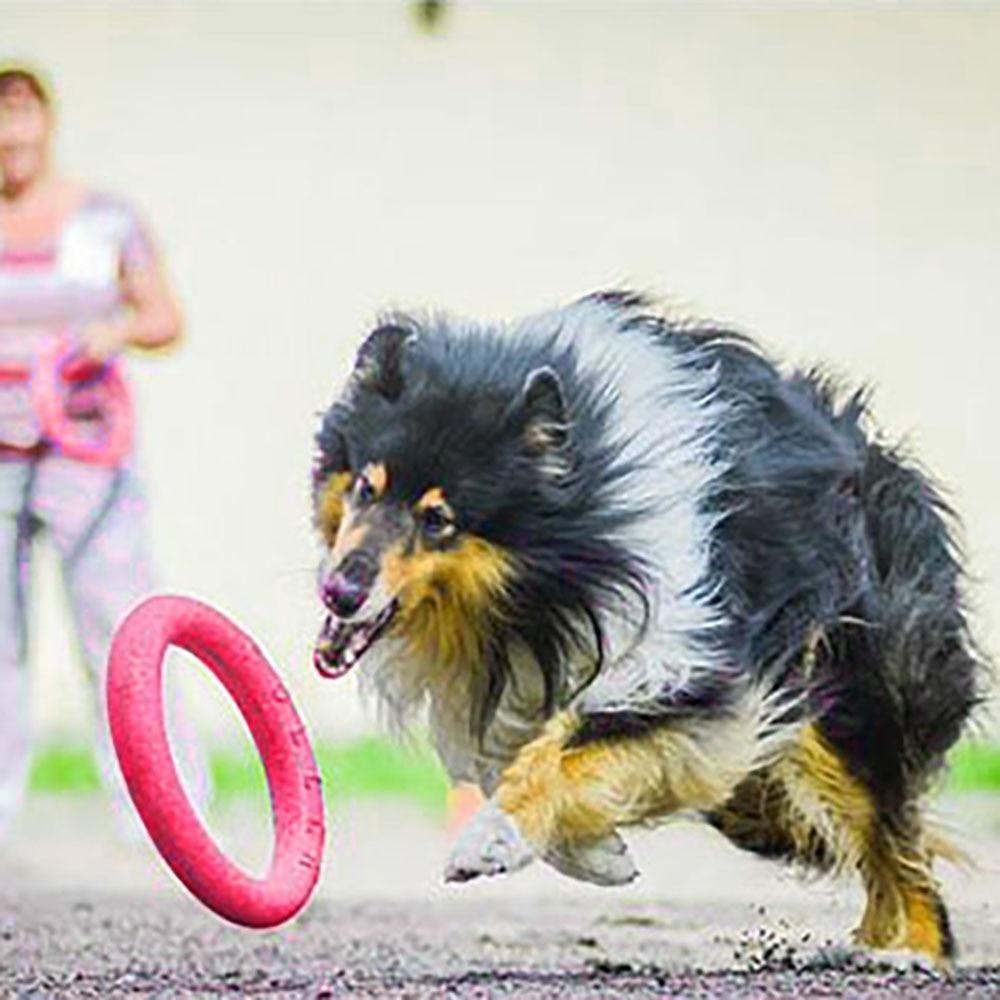 Dog Toys Flying Discs Pet Interactive Training Ring Dog Portable