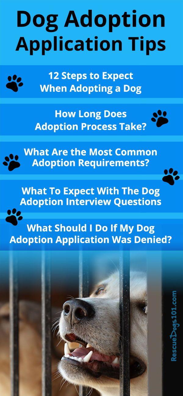 Adopting a Dog Process #petadoption