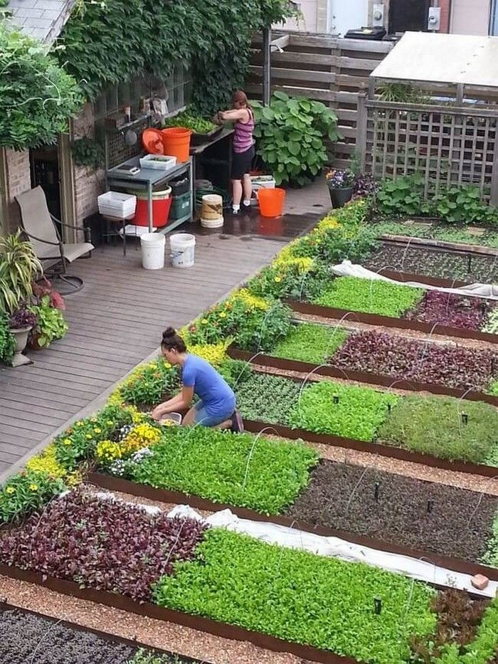 красивый огород и сад ландшафтный