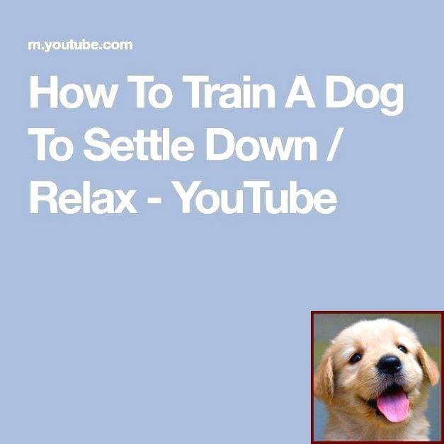 Dog Behavior Zoomies And Dog Training Courses Online Free Dog