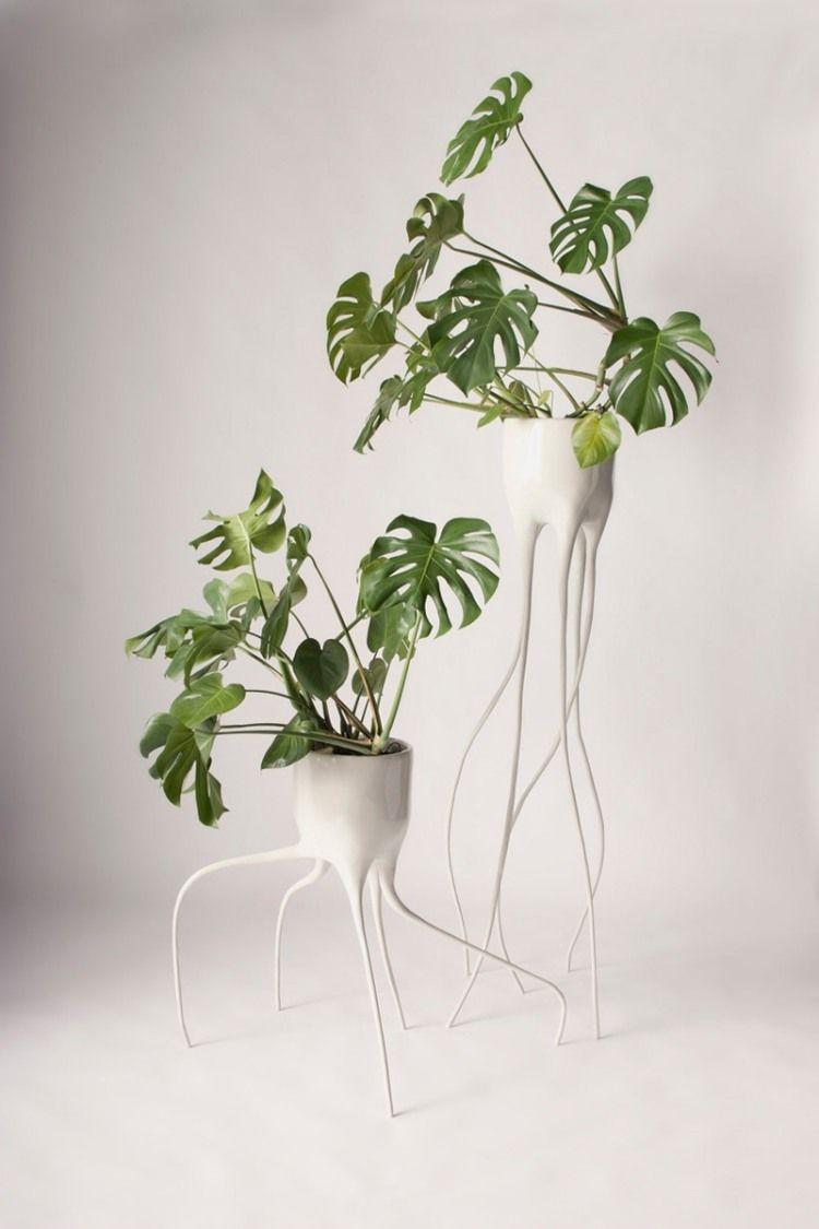 Wei lackierte moderne blument pfe mit monstera pflanze for Zimmerpflanzen wohnzimmer