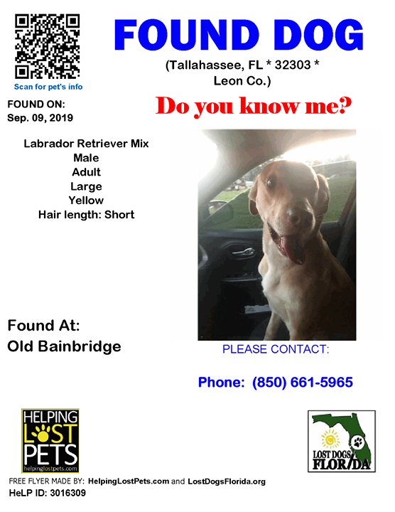Tallahassee Classifieds Pets