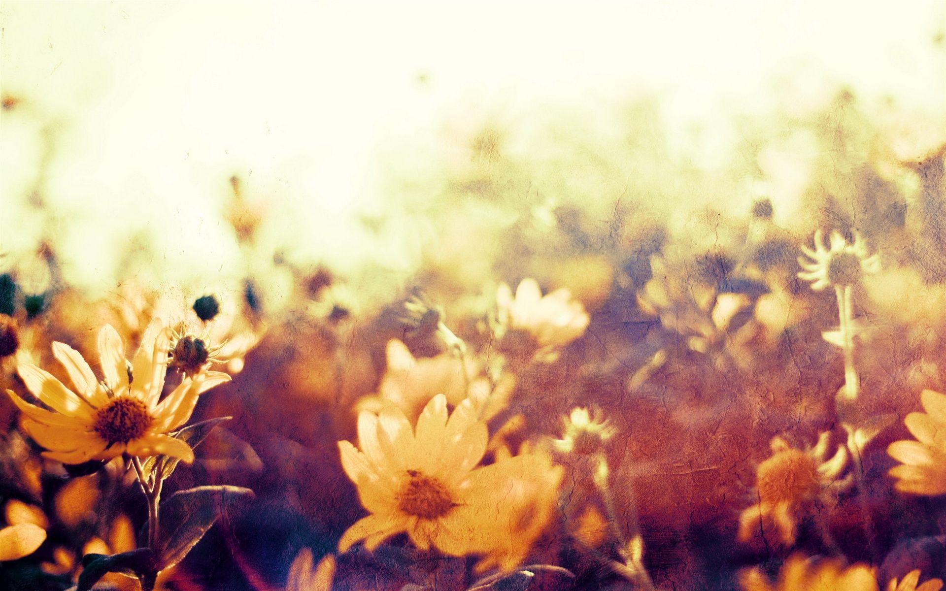 #flores, #fundo, #estilo