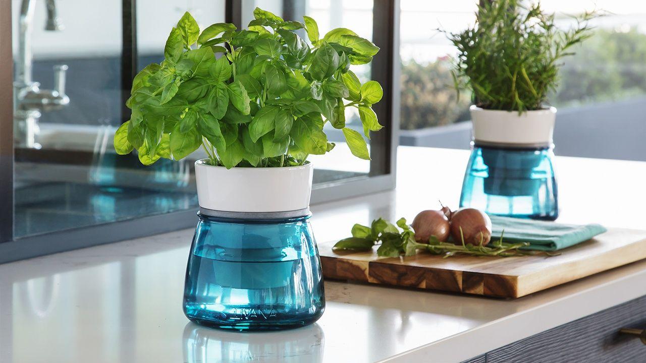 Ceramic selfwatering herb pot herb pots self watering
