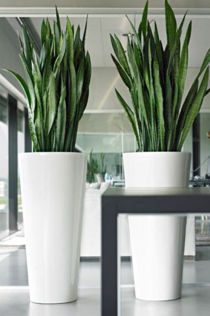 24 Floor Vases Ideas For Stylish Home Decor Large Indoor Plants Large Floor Vase Floor Vase Decor