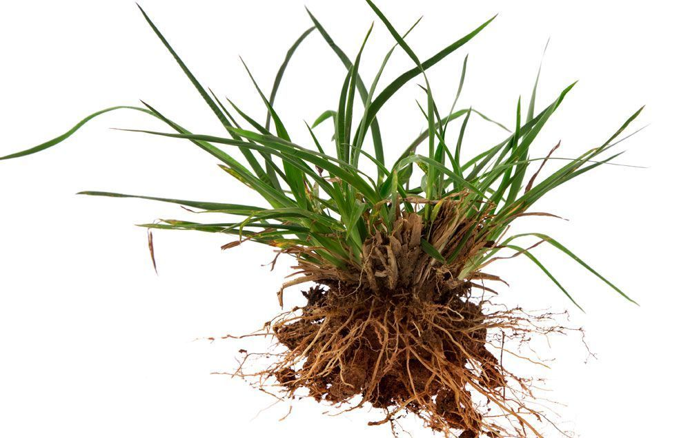 How To Get Rid Of A Yard Full Of Crabgrass