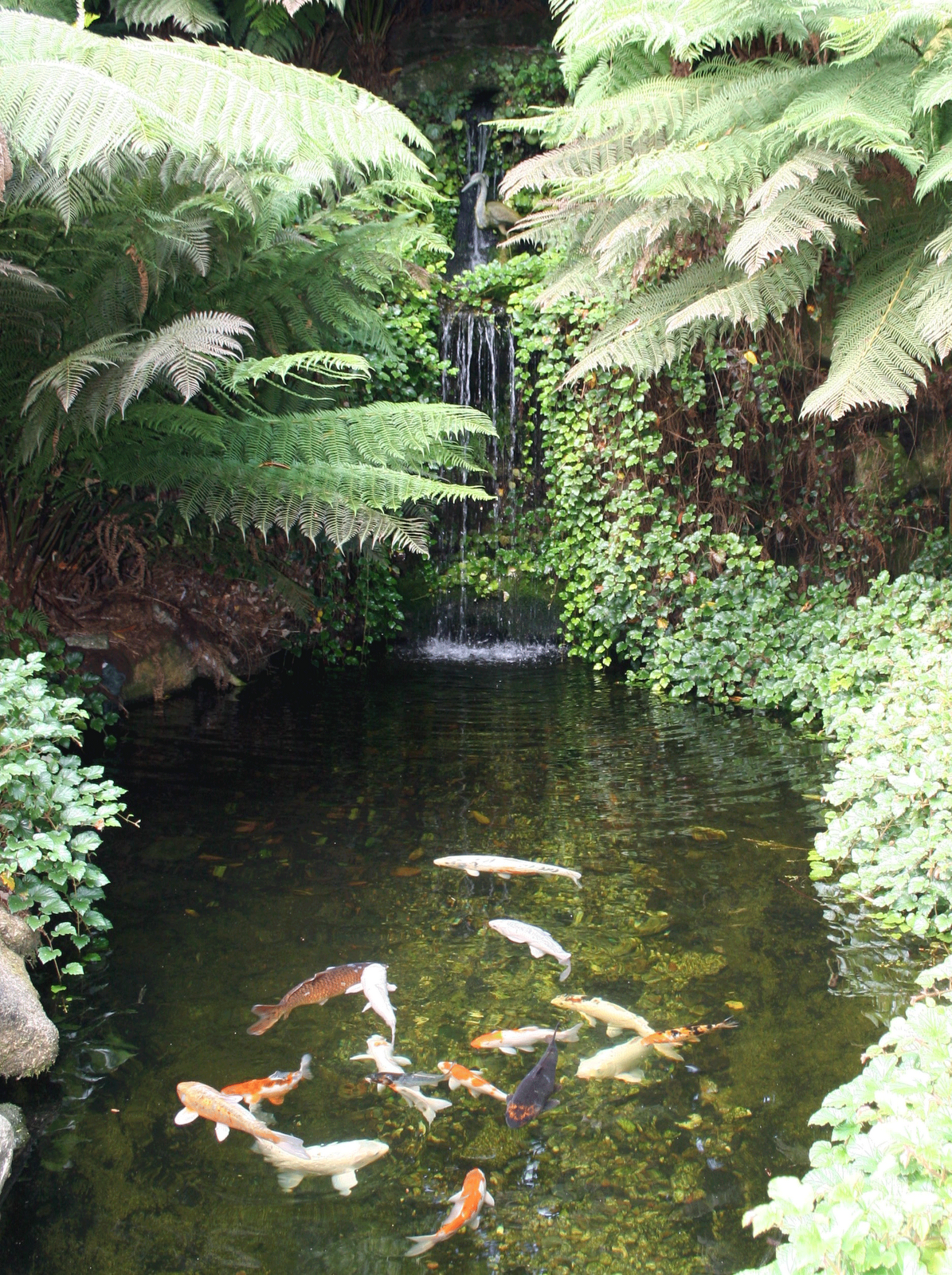 Koi pond love the ferns i want a backyard jungle for Backyard koi fish pond