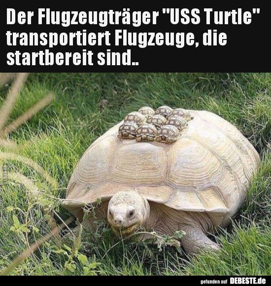 Der Flugzeugträger USS Turtle transportiert Flugzeuge.. | Lustige Bilder, Sprüche, Witze, echt lustig #animalesbebébonitos