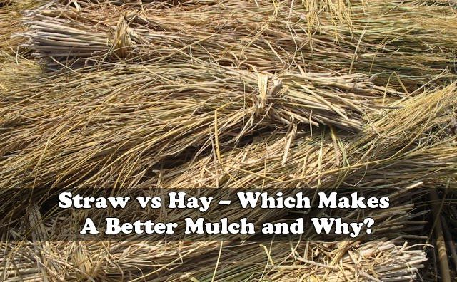 Straw Vs Hay Which Makes A Better Mulch And Why Mulch Garden Yard Ideas Green Living