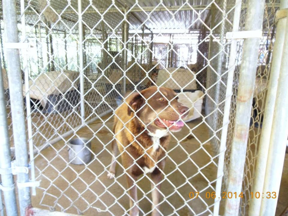 CUPID Facebook Group - These are Animals in Extreme Danger of Dying - Please Joint and Help Share - Foster - Sponsor