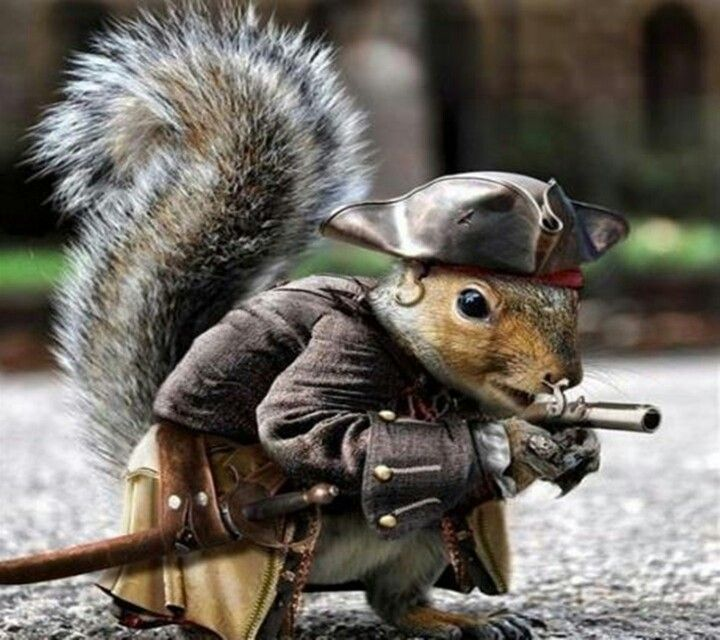 Image result for squirrel with gun