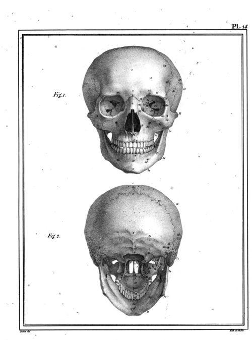 Manuel d'anatomie descriptive du corps humain... par Jules Cloquet, 1825.