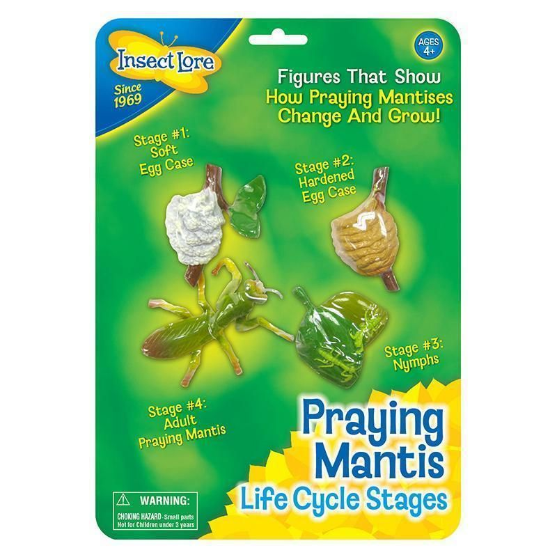 Mantis Life Cycle Stages Life Cycle Stages Praying Mantis Life Cycle Life Cycles