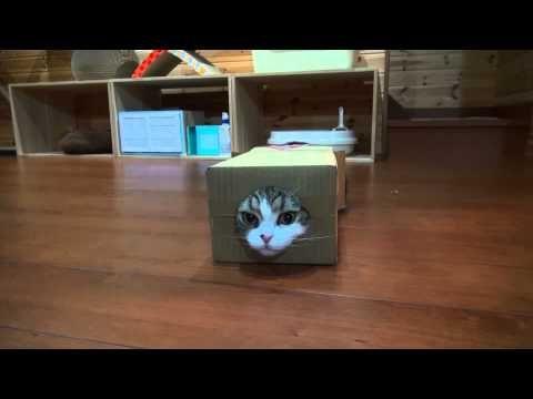 箱とねこ15。-Box and Maru&Hana.- - YouTube