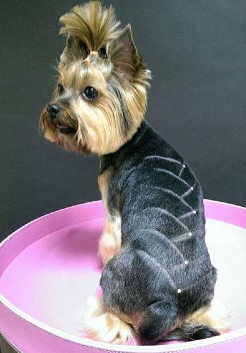 how to groom a yorkie with long hair