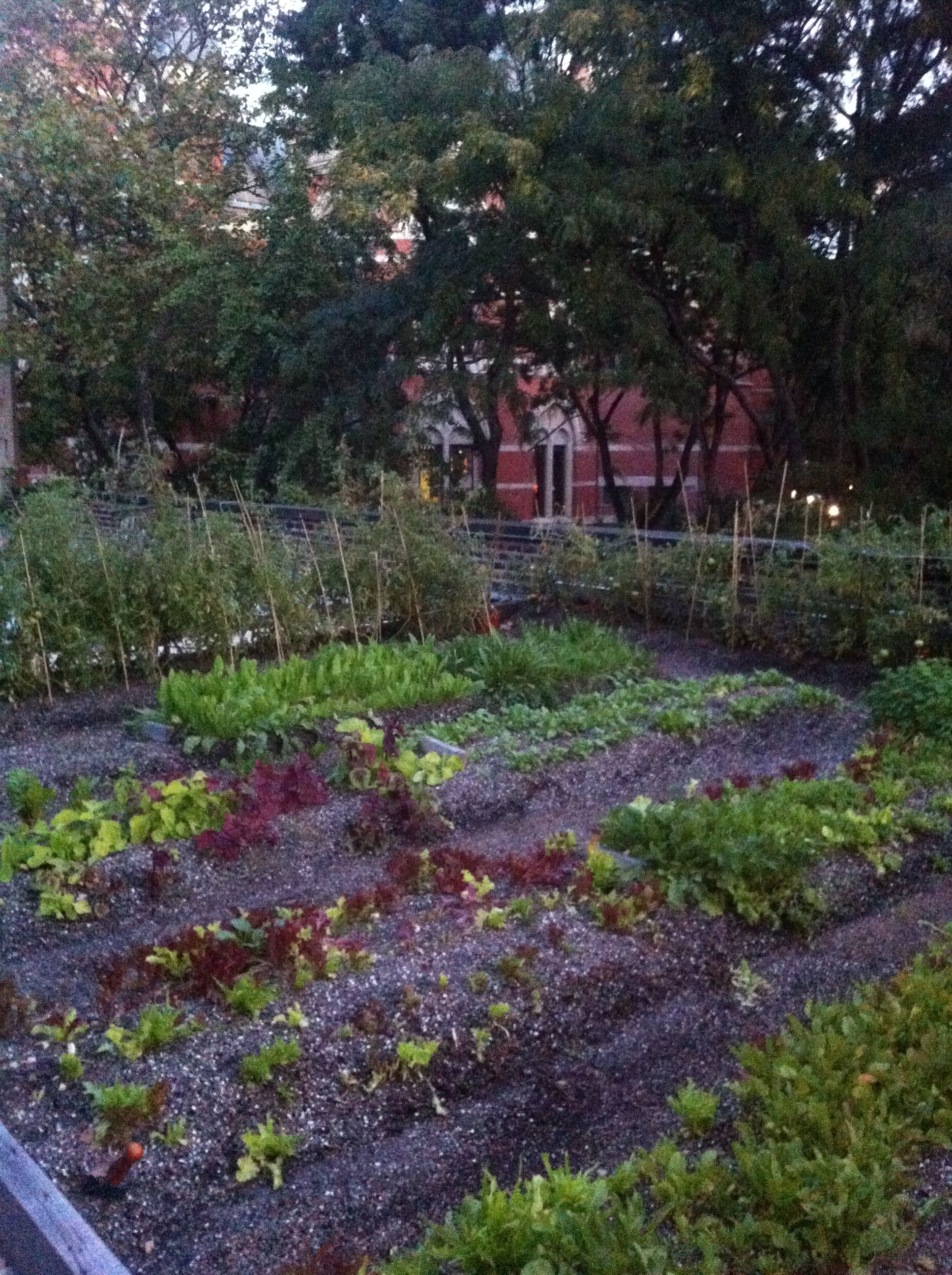 New favorite NYC restaurant, Rosemary's rooftop herb