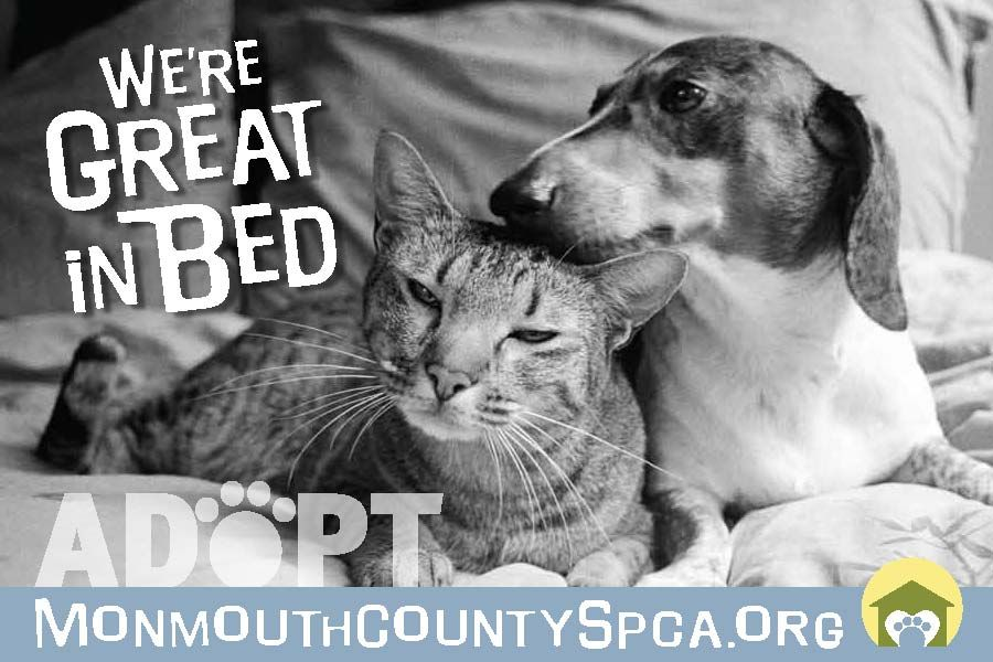 Monmouth County Spca Ad Campaign Ads Pets Pet Adoption