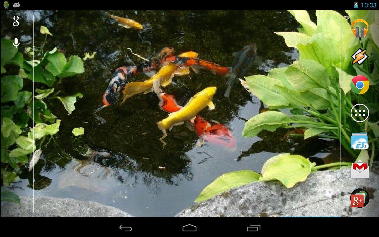 Koi Fish Live Wallpaper Free Android Live Wallpaper Download Fish Wallpaper Live Wallpapers Koi Fish