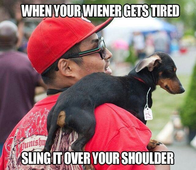 Pg13 Wiener Jokes Funny Dachshund Funny Animal Pictures Funny