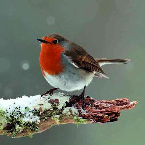 Best Robin Bird Diy Christmas Cards Ideas -  - #Bird #Cards #Christmas #DIY #Ideas #Robin