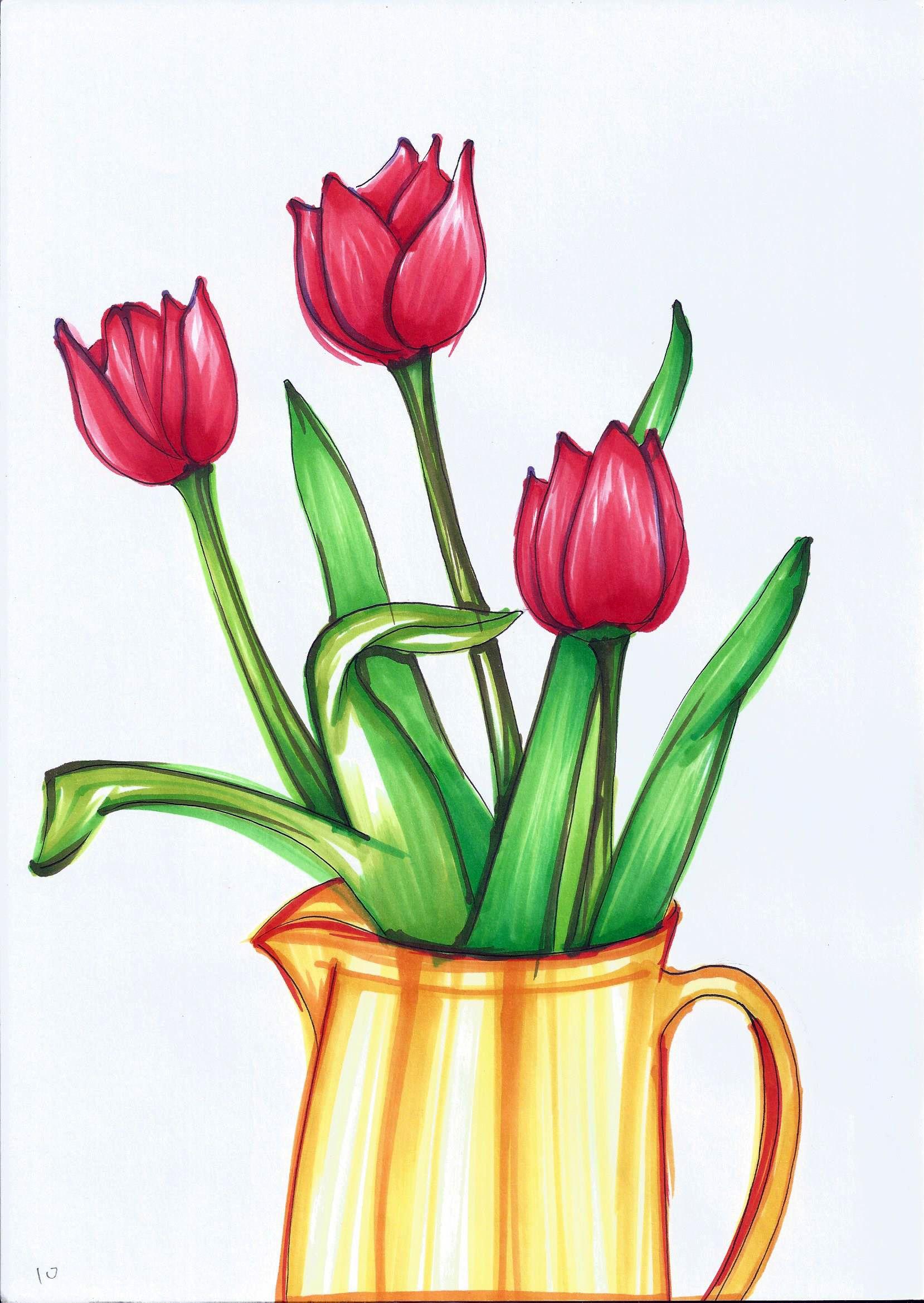 Tulipa_010