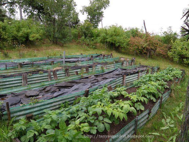 Terrace gardening on slopes never seen potatoes growing on a terraced slope gardening - Lay outs garden terrace ...