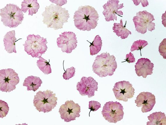 Reserved For Sarah Etsy Dried Flowers Cherry Blossom Paper Flowers