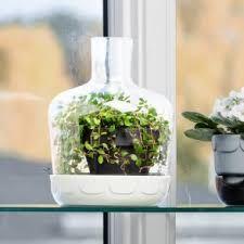 bildergebnis f r zimmerpflanze in glasvase indoorgarden pinterest mini gew chshaus. Black Bedroom Furniture Sets. Home Design Ideas
