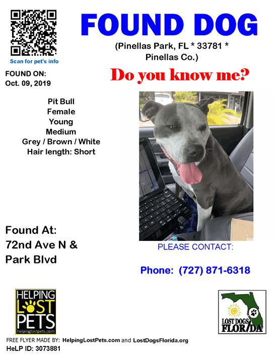 Found Dog Is This Your Lost Dog Do You Know This Dog Pinellaspark 72nd Ave N Park Blvd Fl 33781 Pinellas Co Dog Losing A Dog Losing A Pet Dogs