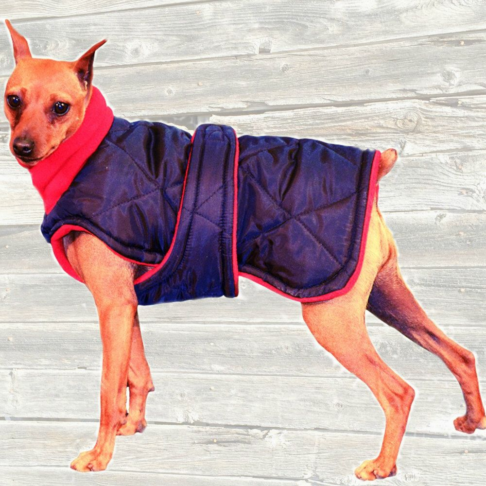 Winter Dog Coat, Custom made with quilted and insulated nylon ... : quilted dog coats for winter - Adamdwight.com
