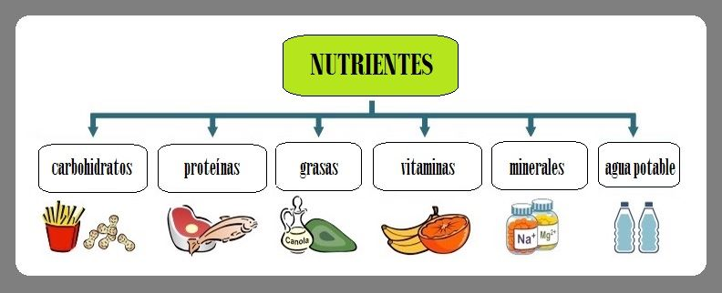 Nutrientes Qué Son Explicación Fácil Alimentos Para Niños Nutrientes Alimentos