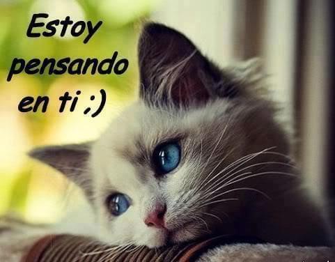 Hermosas Imagenes De Gatos Con Frases De Amor Para Dedicar A Nuestra