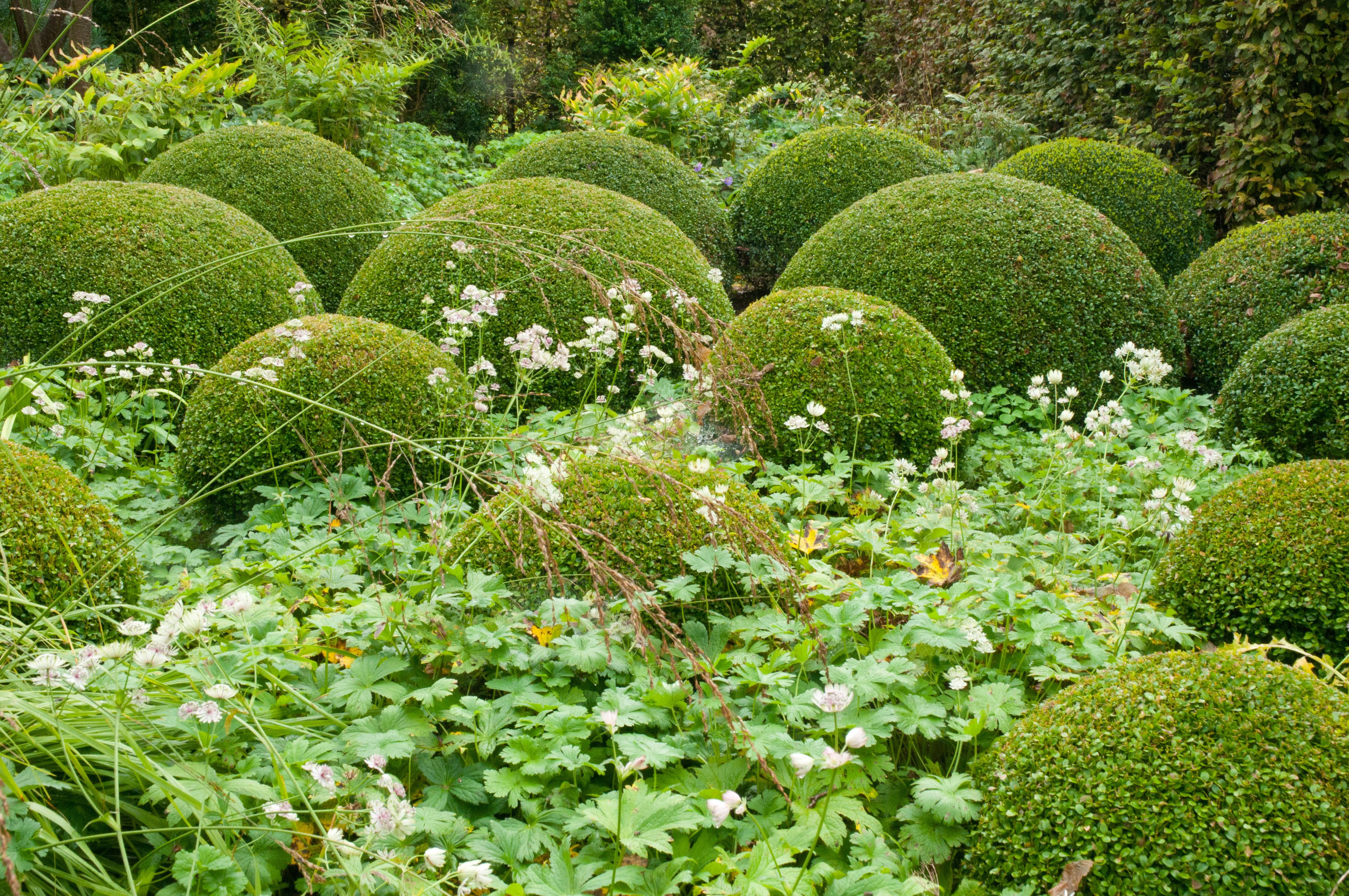 Box balls with astrantia grean idea to do with moss as for Pflanzengestaltung garten