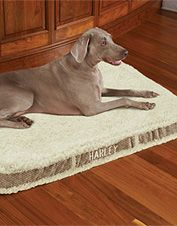 Bolster Dog Beds | Therapeutic Beds for Dogs | Orvis