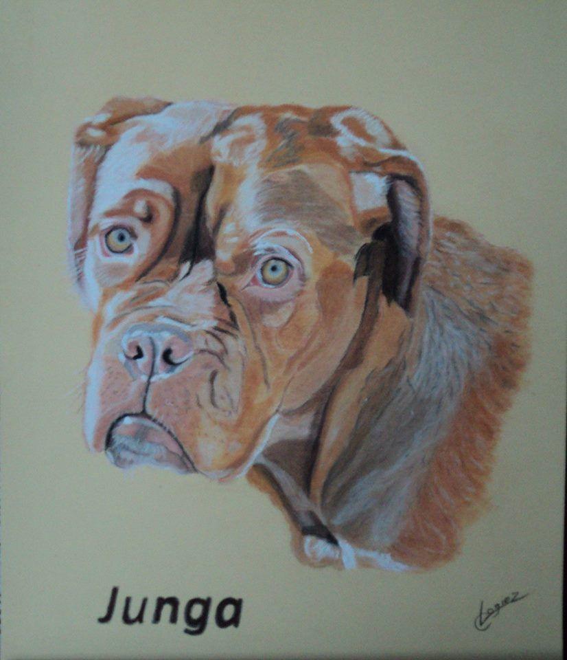 portrait animalier réalisé au pastel
