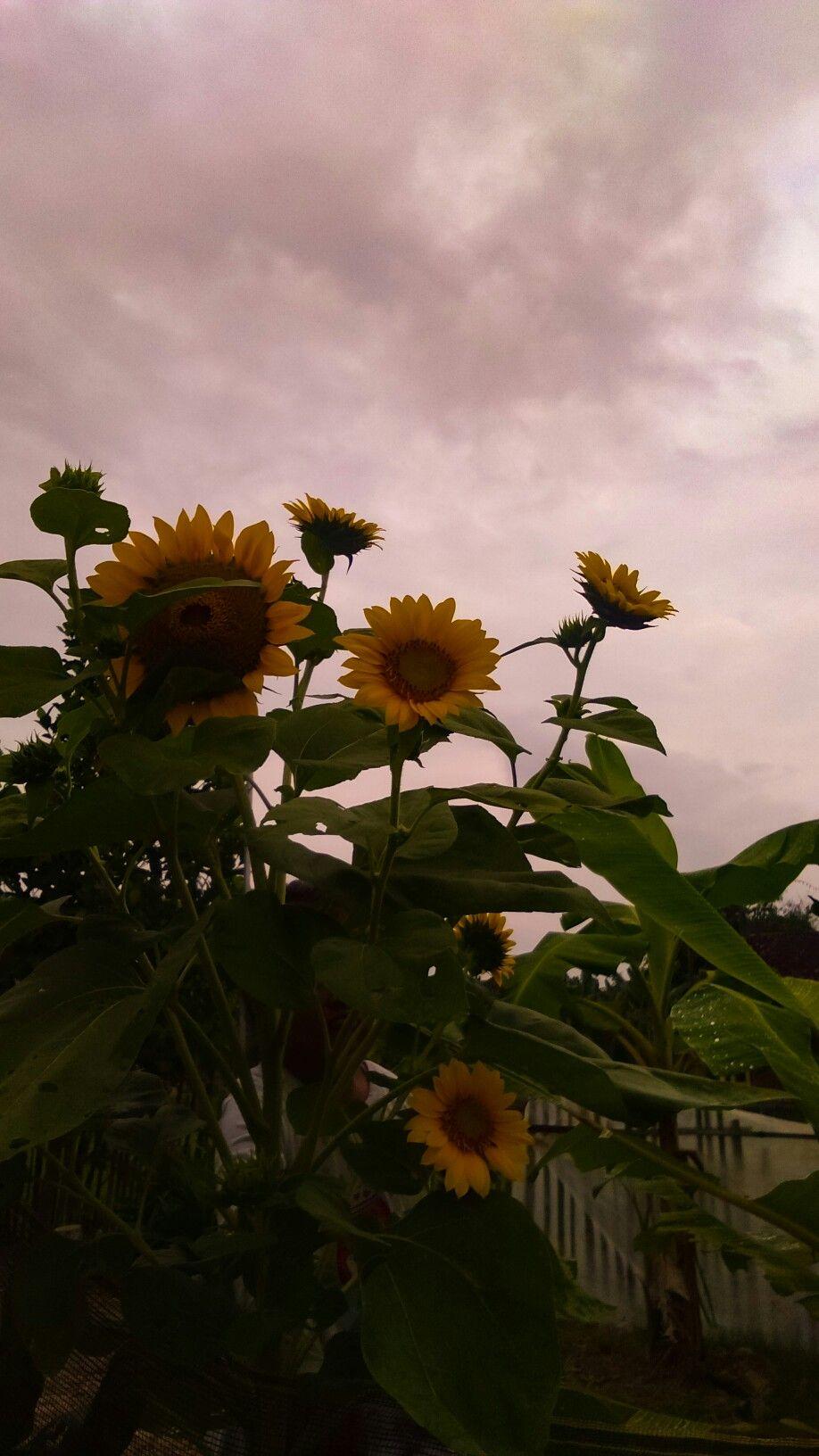 Jangan Bandinkan Prosesmu Dengan Orang Lain Karna Tak Semua Bunga Tumbuh Dan Mekar Bersamaan Flowers My Pictures Plants