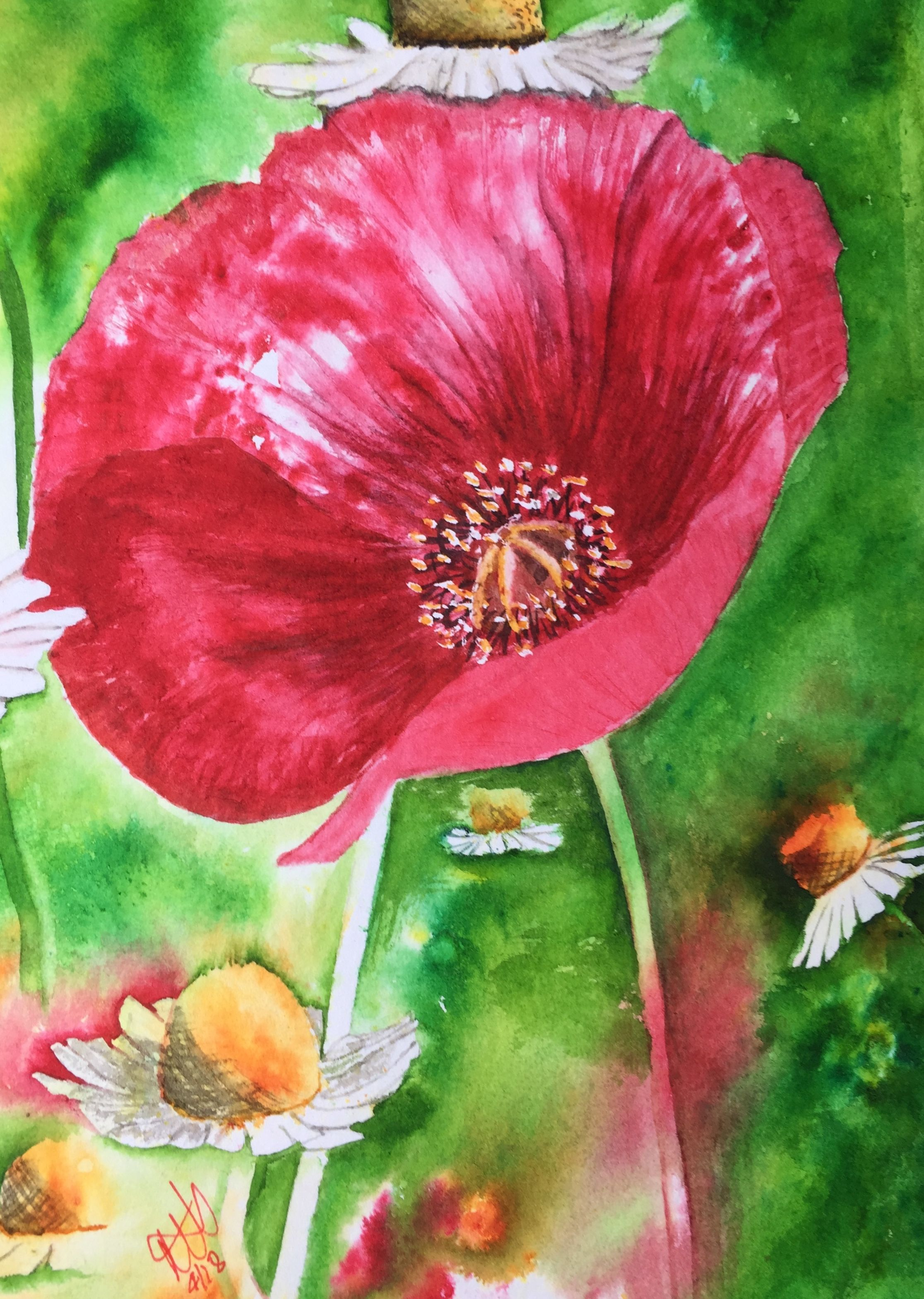 Favourite Poppy I Ve Ever Painted And I Ve Painted A Lot Of