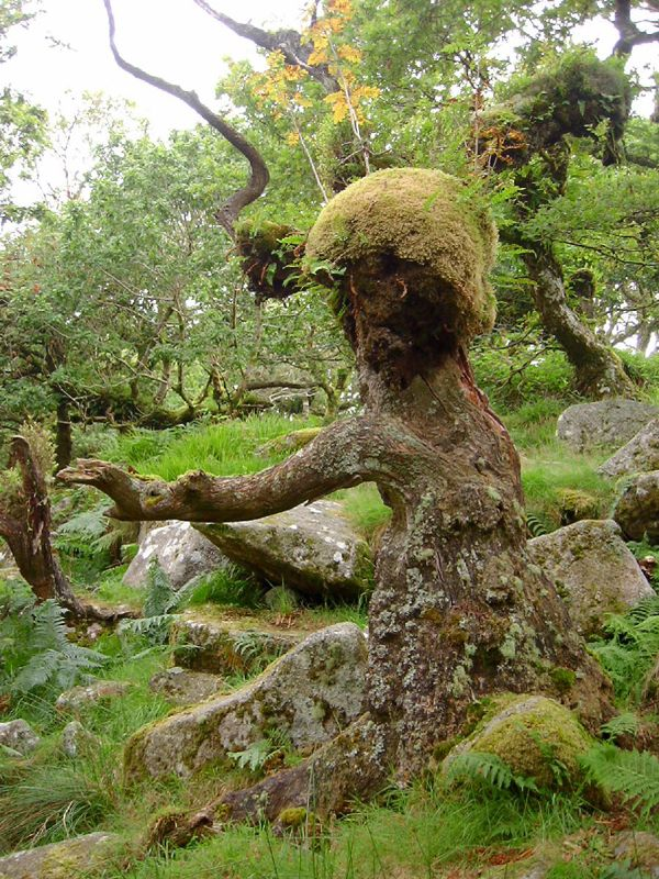 Trees That Look Like People Part Two Perfect Companions For Oak Kitchens Blog Deterra Kitchens Tree Human Tree Mossy Tree
