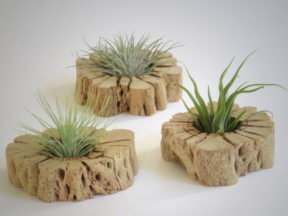 Plant Wall Art air plant wall art - unique hand cut cactus wood slabs with living