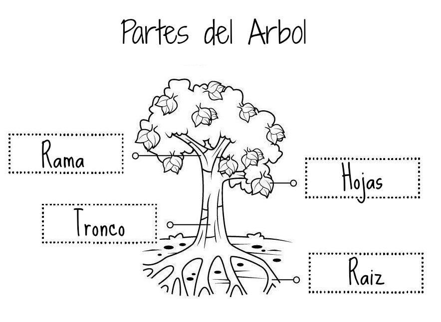 Las Partes De Las Plantas Y Arboles Partes De La Planta